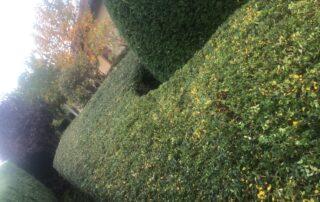 Pflege von Gärten und Parks durch das Team von Garten Kalisch